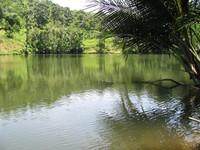 Dangdang Ageung dan pohon palem, tempat munculnya ular-ular kecil.