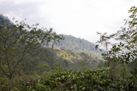 Pebukitan di Gunung Argopuro