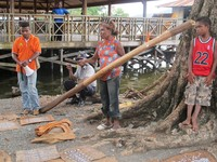 Batang pohon Ombou yang jadi bahan dasar lukisan kulit kayu (Sastri/ detikTravel)