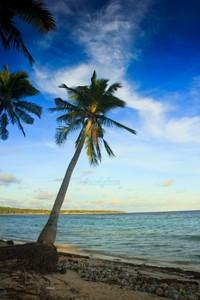Pohon kelapa dengan banyak sampah botol plastik