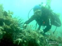 Alam bawah laut Pulau Sepa dalam kondisi air yang tidak jernih
