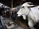 Setelah 14 Tahun, China Akhirnya Impor Daging Sapi dari AS