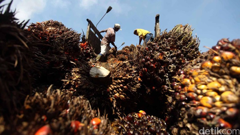 Palangka Raya Jadi Ibu Kota Baru, Industri Hilir Sawit akan Tumbuh