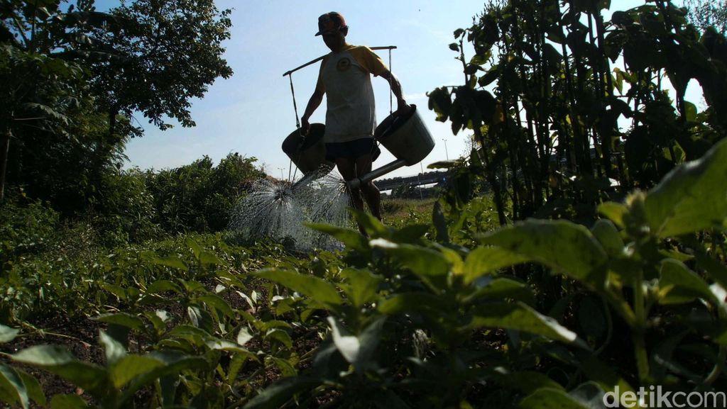 Petani Harap Program Aksi Pangan Tak Hanya Jalan di Era Jokowi