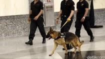 Dicari! 100 Pawang Anjing yang Berani Kerja di BNN