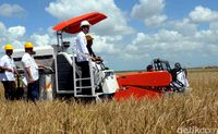 Jokowi ikut panen padi di Merauke, Mei 2015 lalu.