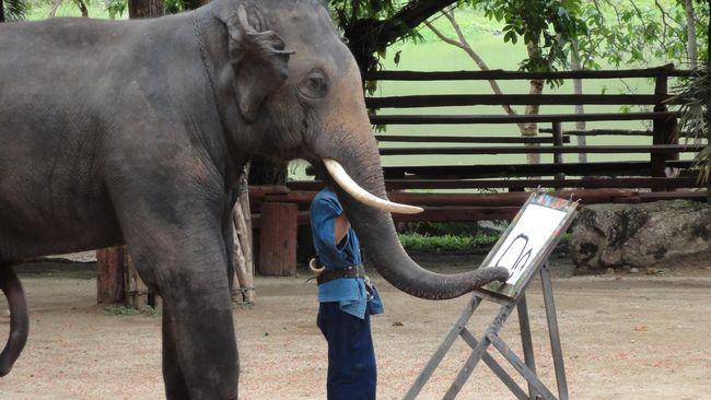 pria thailand tewas diserang gajah saat makan malam di