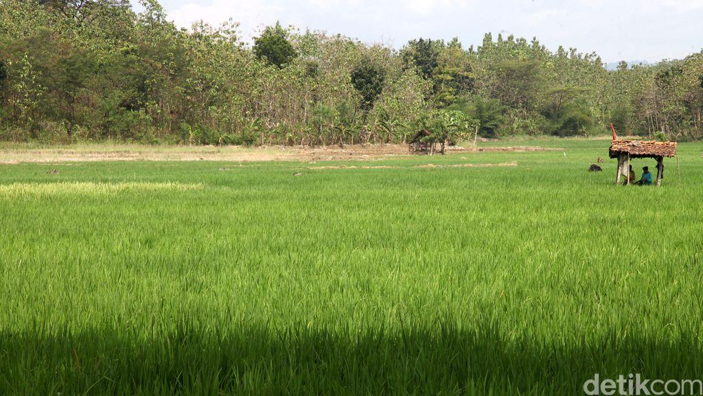 Begini Caranya Agar Produksi Pangan Tak Terpusat di Pulau Jawa