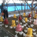Bakal Ada Pabrik Bahan Baku Pakan Ternak Rp 6,6 T di KEK Sei Mangkei