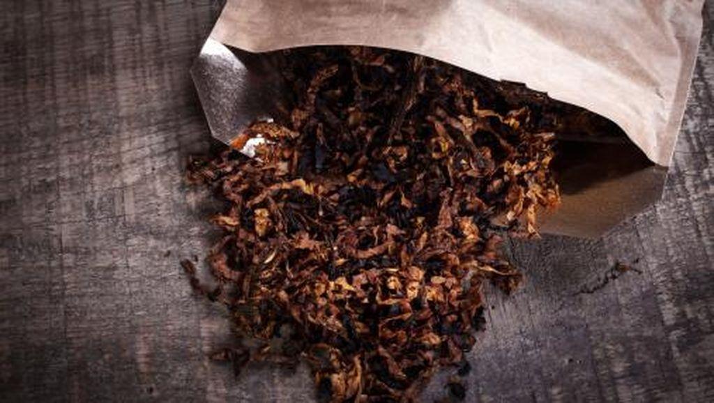 Tekan Konsumsi Rokok, Kemenkes Harap Impor Tembakau Di-stop