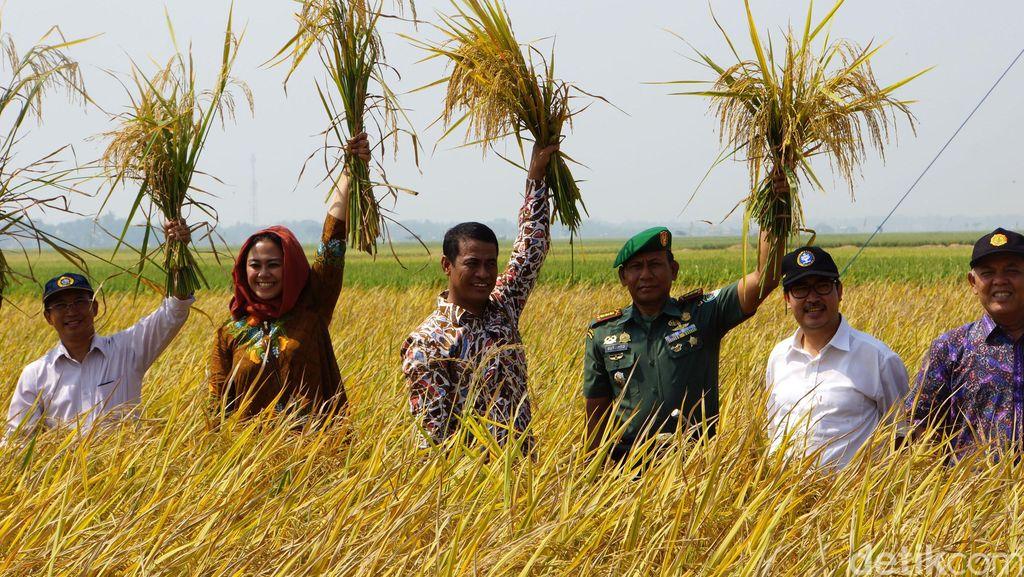 Kontribusi Pertanian ke Pertumbuhan Ekonomi RI