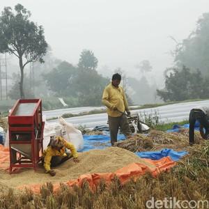 Biaya Produksi Padi RI Lebih Mahal Dibanding Vietnam