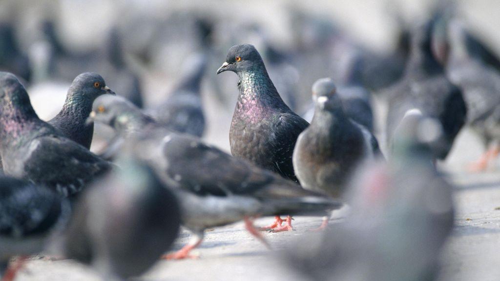 Korban Meninggal Akibat Wabah Flu Burung di China Tembus 161 Orang