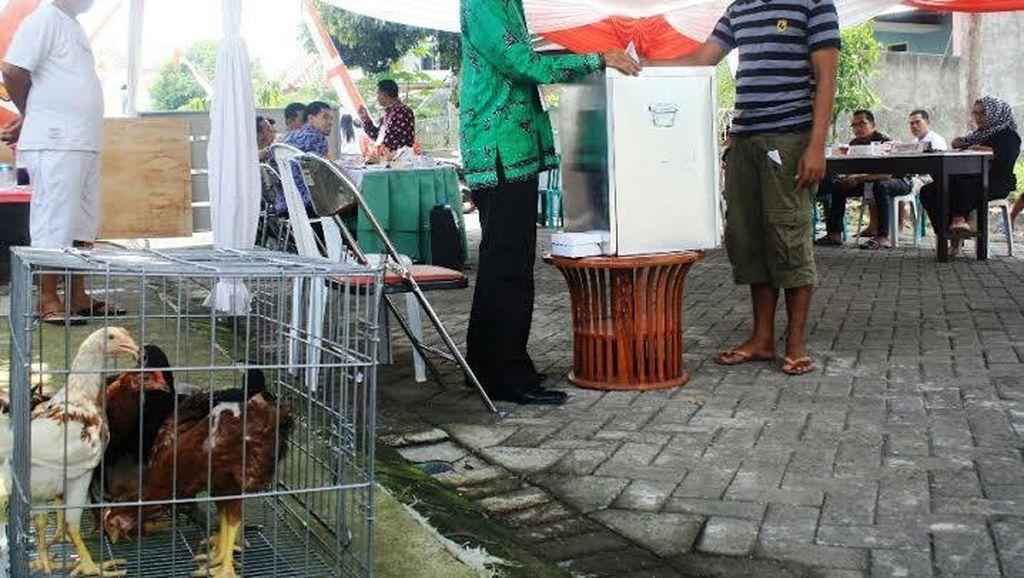Nyoblos di TPS ini Dapat Ayam dan Kompor Gas