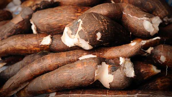 Pengusaha Impor Singkong untuk Industri Makanan dan Pakan Ternak