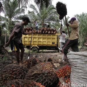Bakrie Sumatera Kejar Produksi Sawit 450 Ribu Ton Tahun Ini