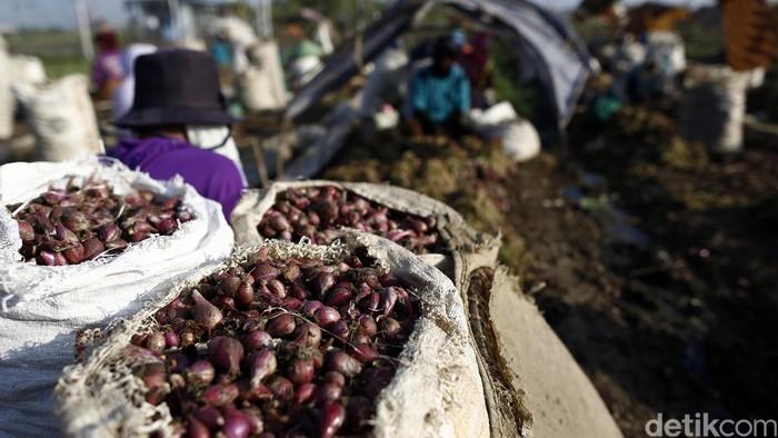 Mentan Minta Bulog Segera Serap Bawang Merah Petani Sumbar