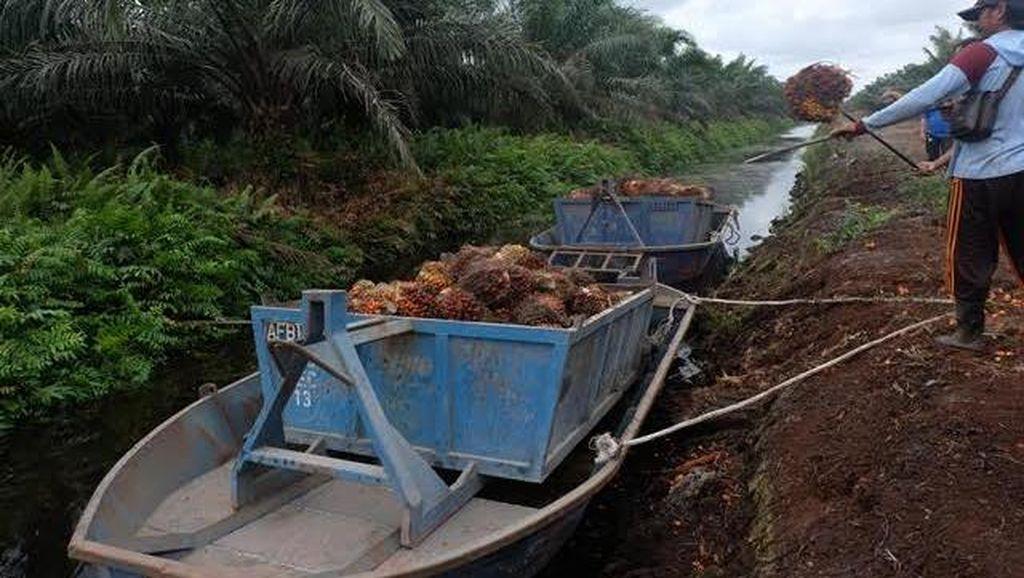 400.000 WNI di Sarawak, Ilegal Atau Legal?