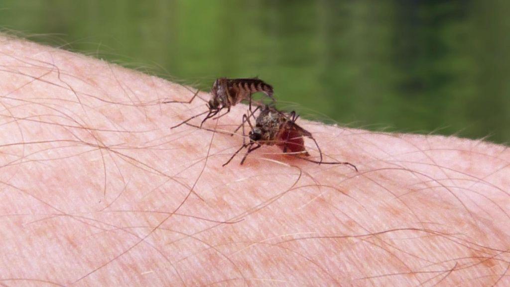 Vaksin Malaria Rampung, Tiga Negara Ini Dapat Giliran Pertama