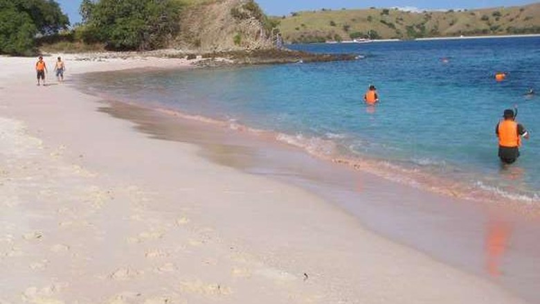 Ilustrasi Pink Beach di Flores (Shafa/detikTravel)