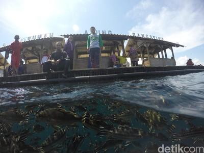 Ramai! Ribuan Turis padati Wisata Bahari Bunder Banyuwangi