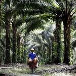 Dirut Baru Holding BUMN Perkebunan: Tahun Ini Harus Untung