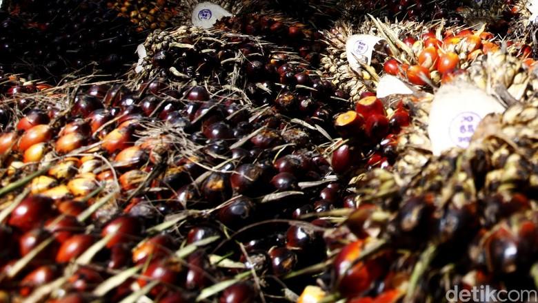 Kebun Sawit Sering Disebut Merusak Hutan dan Boros Air, Benarkah?