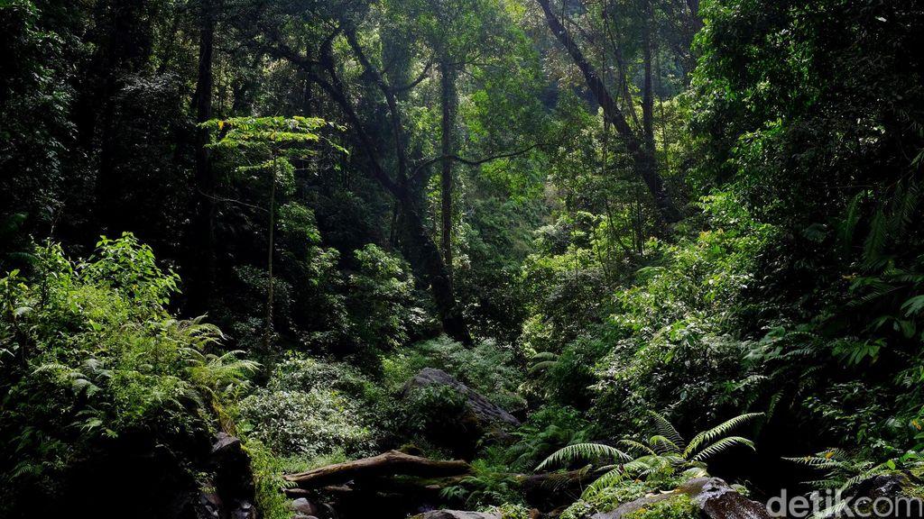 Kemen LHK: Tata Ruang Hutan Banyak Daerah Tak Berpihak ke Rakyat