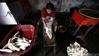 RI Impor Singkong dari Vietnam, Bisakah Disetop?
