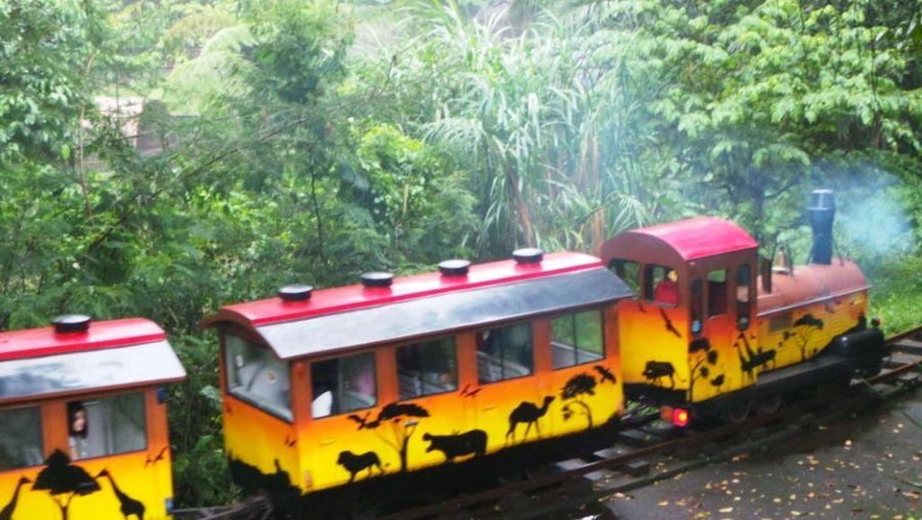 Tut.. Tut.. Asyiknya Naik Kereta Wisata di Taman Safari Prigen