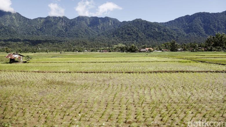 Percepat Distribusi Lahan, Jokowi Gandeng Ormas Keagamaan