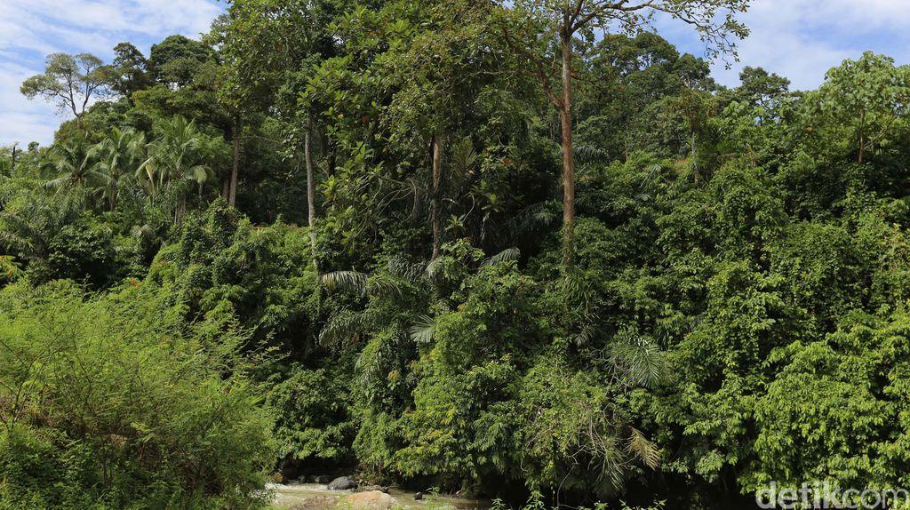 Tahun 2030, Kawasan Hutan Nasional Berkurang Jadi 112 Juta Hektare