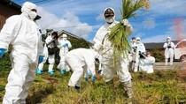 Kini Beras Fukushima Sudah Kembali Dijual di Inggris