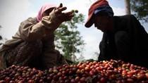 Kirim Ahli ke Vietnam, RI Belajar Tingkatkan Produktivitas Kopi