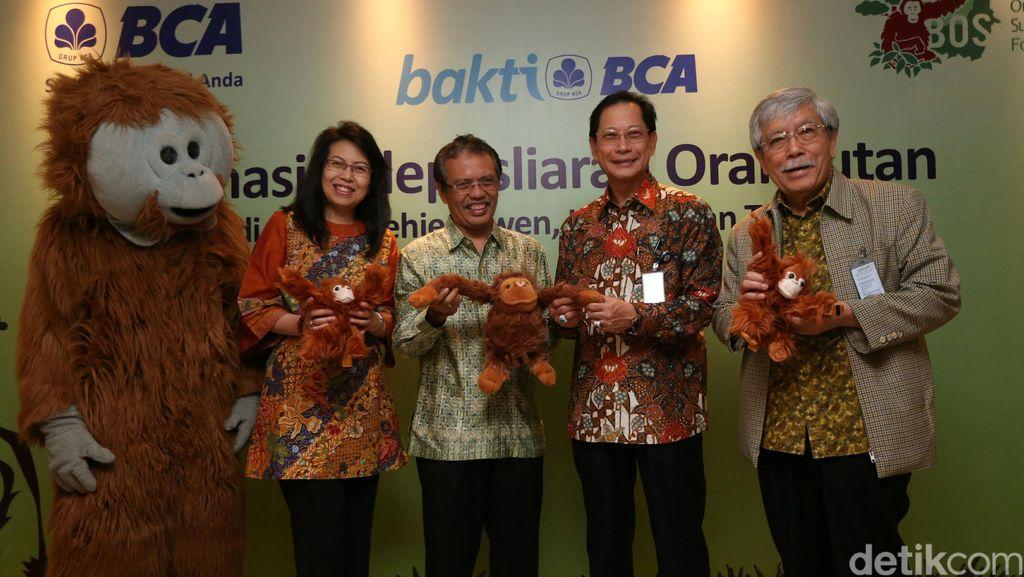 BCA Lepas Liarkan Orangutan