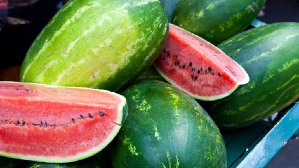 Petani Semangka Bandingkan Bunga KUR dengan Rentenir
