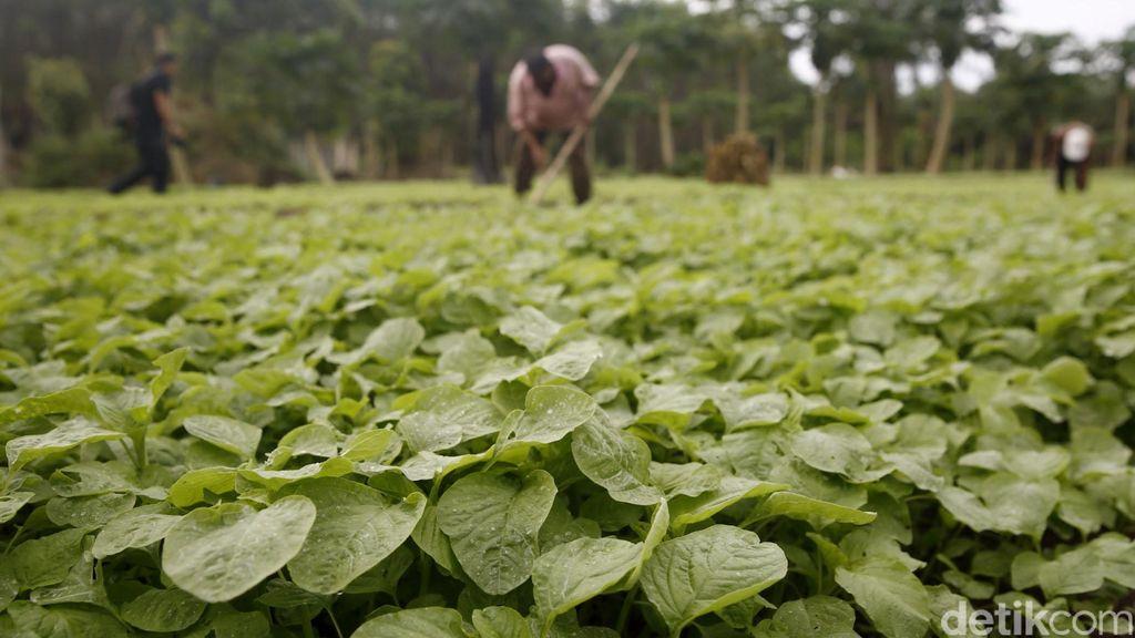 Jokowi Ingin Masyarakat Miskin Punya Akses Pengelolaan Tanah