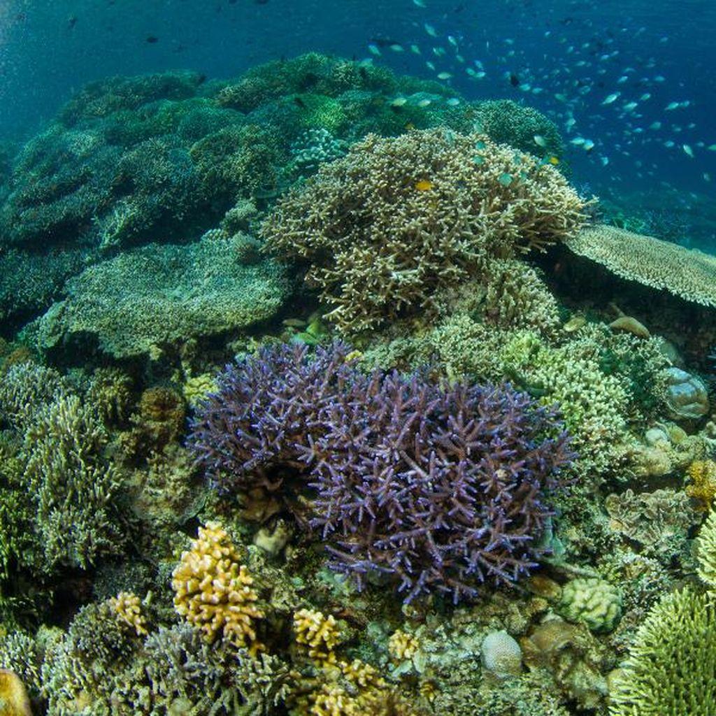 Fotostop: Pesona Alam Laut