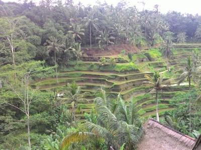 Pesona Sawah Terasering Bali di Tegal Alang, Ubud