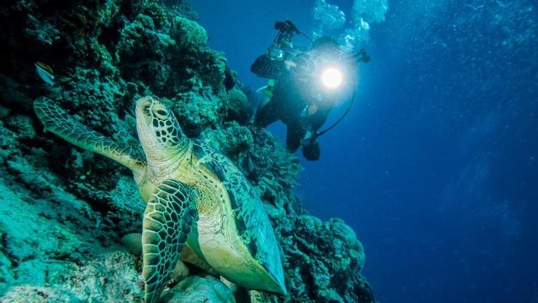 Ilustrasi wisata diving di Indonesia (Thinkstock)