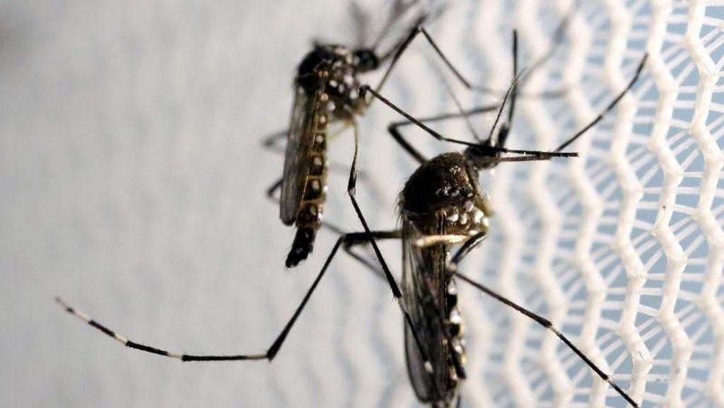Jika Setipe dengan Dengue, Mengapa Cuma Zika yang Memicu Mikrosefali?