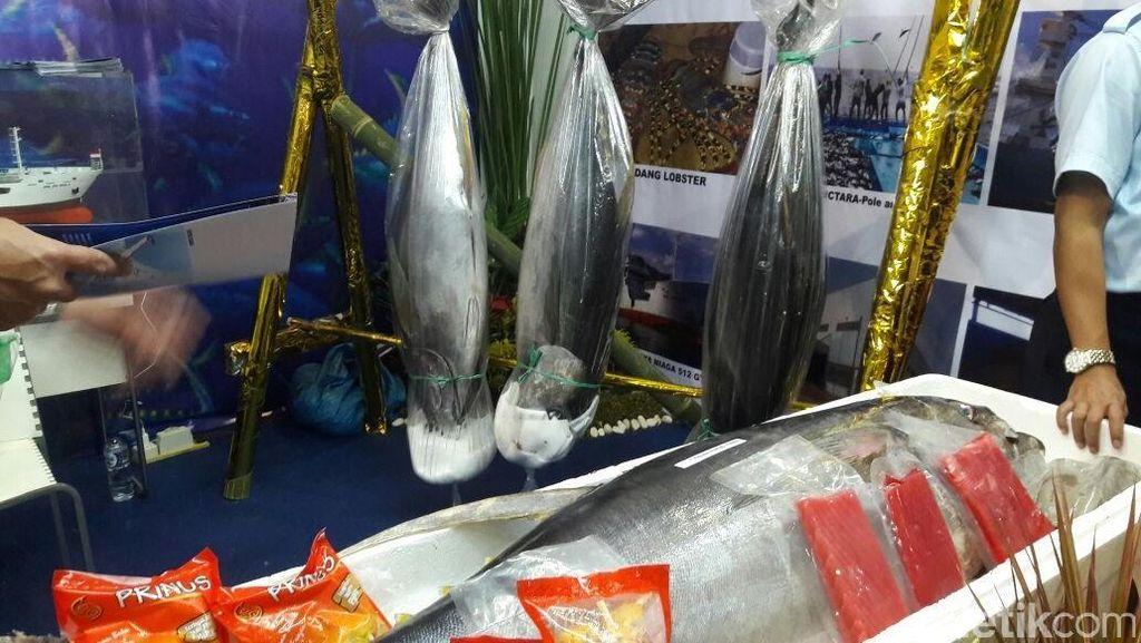 Akibat Illegal Fishing, Populasi Tuna RI Mengkhawatirkan