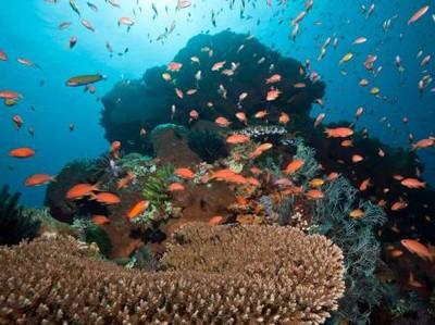 Mengenal Toyapakeh, Spot Diving di Bali yang Dirusak Turis Nakal