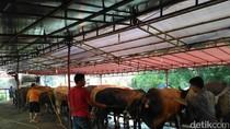 Pedagang Hewan Kurban di Akses UI Raup Untung, dari Ratusan Ekor kini Sisa Belasan