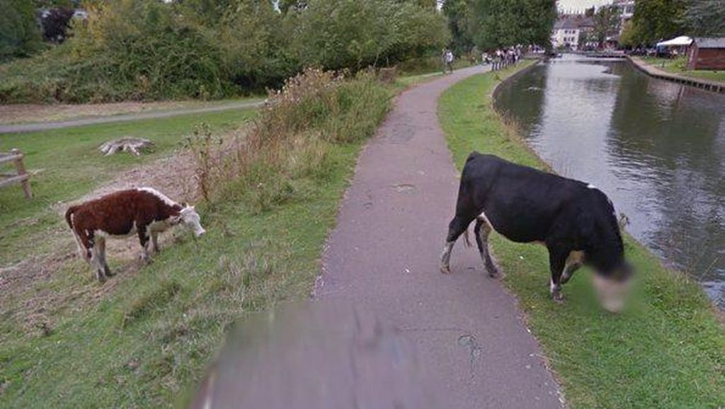 Ketika Google Street View Sensor Wajah Sapi