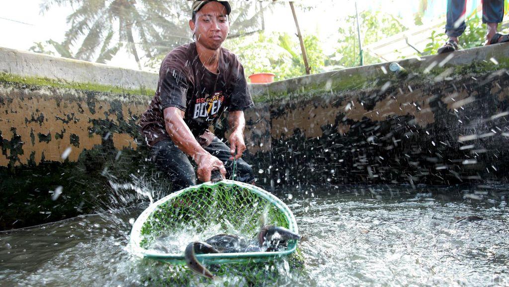 Begini Cara Susi Genjot Budidaya Ikan 22,7 Juta Ton di Tengah Cuaca Ekstrem