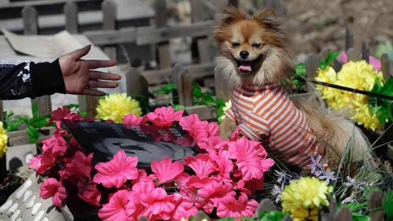 Suasana Pemakaman Baifu di Beijing saat perayaan Qingming (Jason Lee/Reuters)