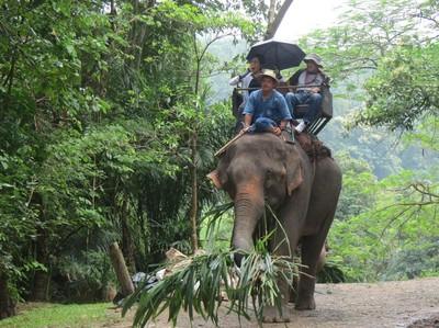 Video Serunya Naik Gajah di Chiang Mai