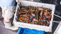 Ratusan Nelayan di Jember Disinyalir Masih Berburu Bayi Lobster