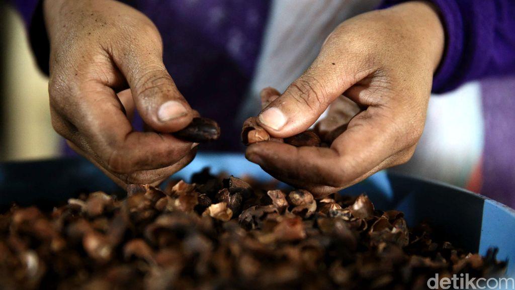 Indonesia Ingin Jadi Produsen Kakao Terbesar Kedua Dunia